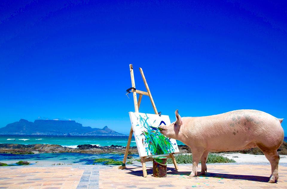 Meet Pigcasso, The World's First Pig Artist Kids News Article