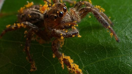 Guess What? Spiders Eat Their Greens Too!