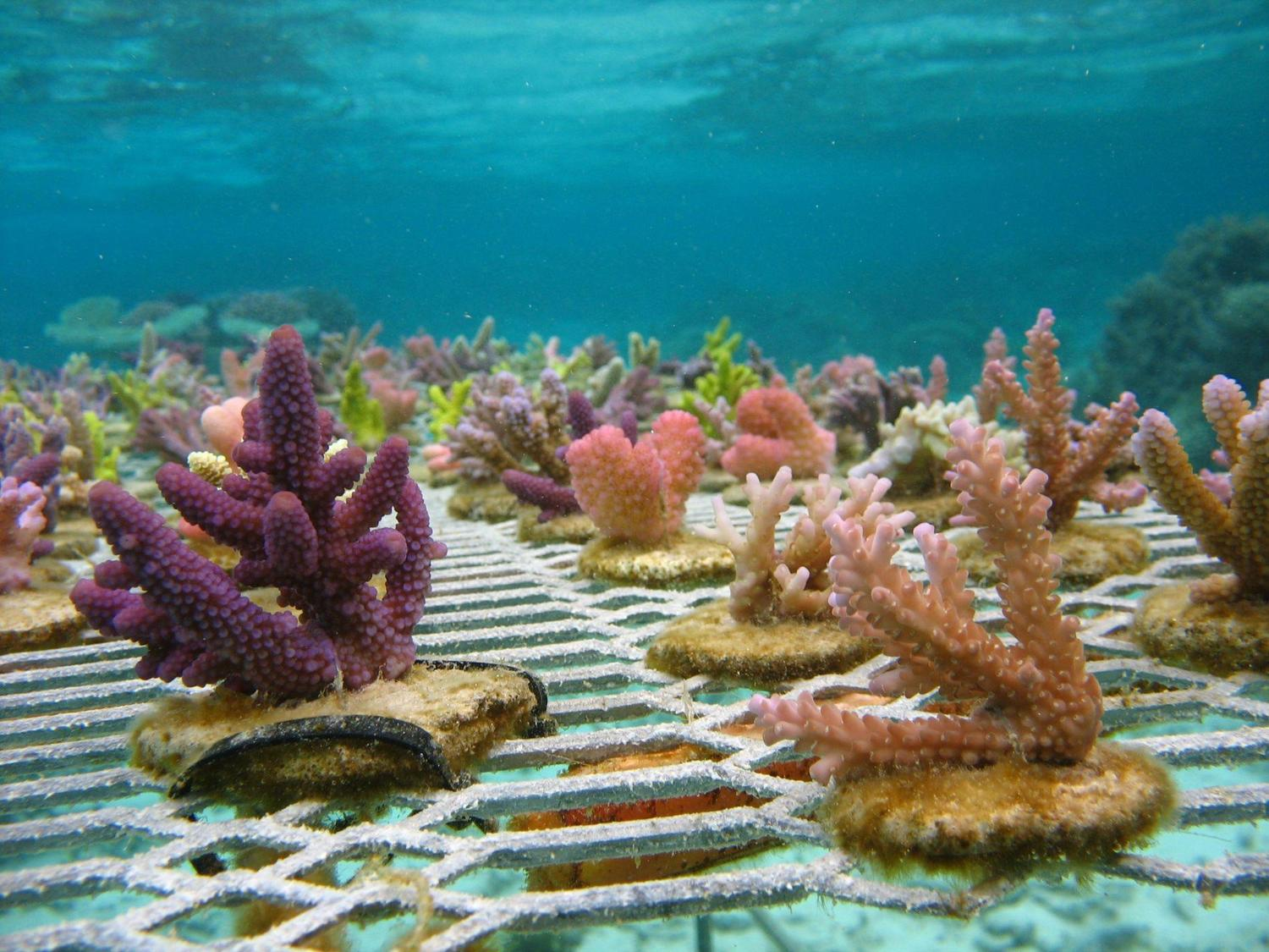 Coral Vita Plans To Restore The Worlds Coral Reefs With Land Based Farms#post_comments on Tiny House Plans