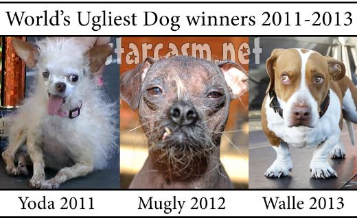 though the competition may seem derogatory to some people it is a fun event organized by an animal psychiatrist who vets the dogs before the event to