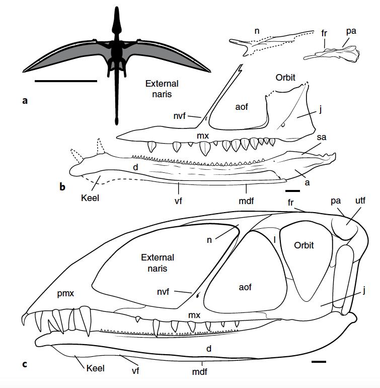 New Pterosaur Species Discovered In Utah Desert Had A Pelican Like