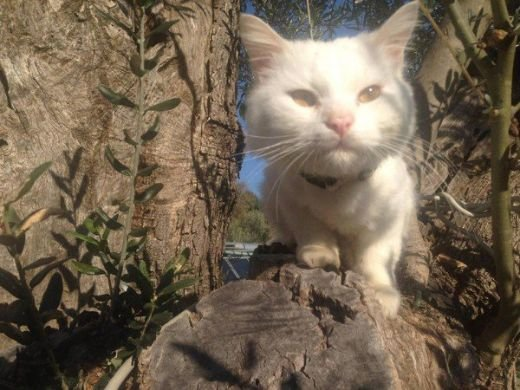 Social Media Helps Kunkush, A Lost Refugee Cat Reunite With His Family