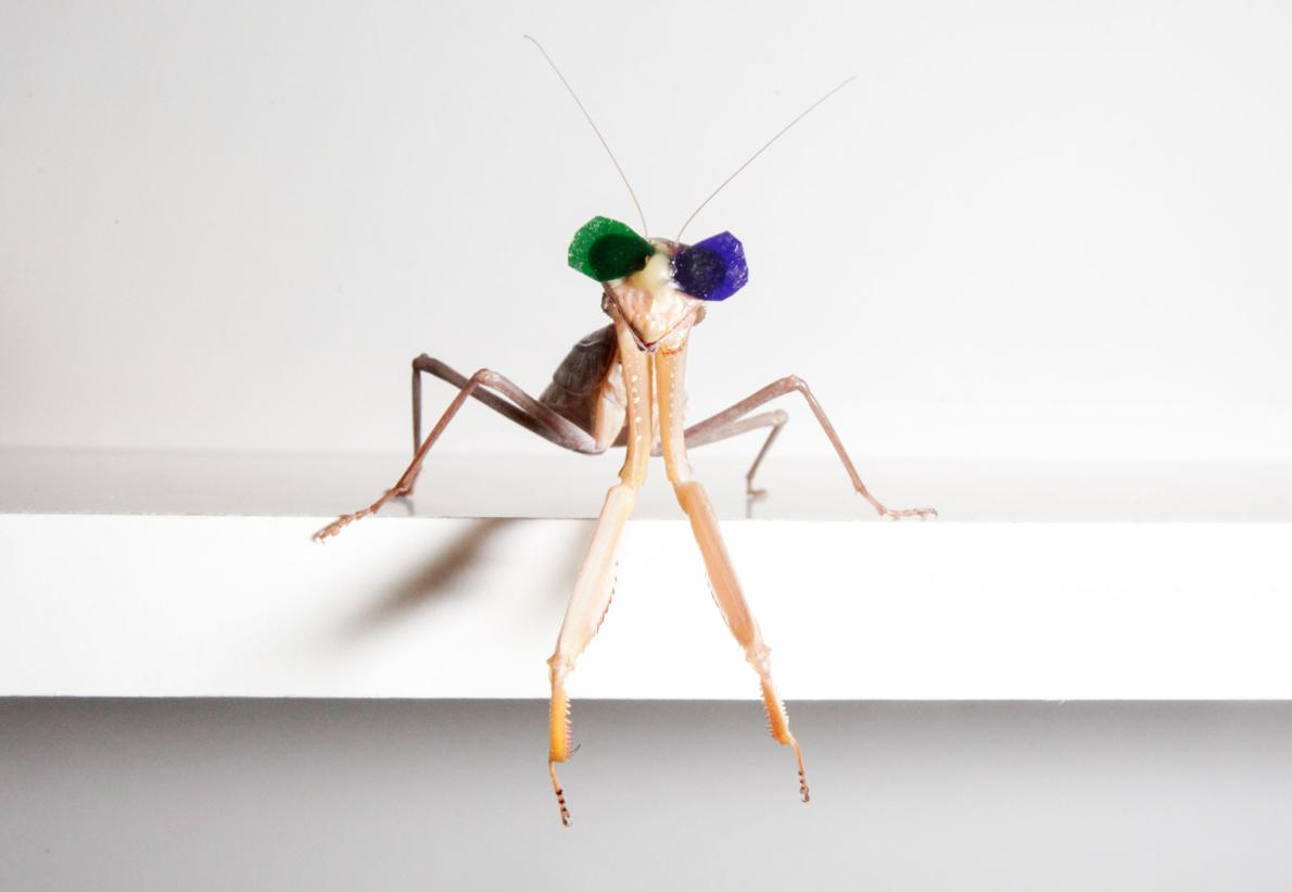 Bespectacled Praying Mantises Surprise Researchers With A New Form Of 3D Vision