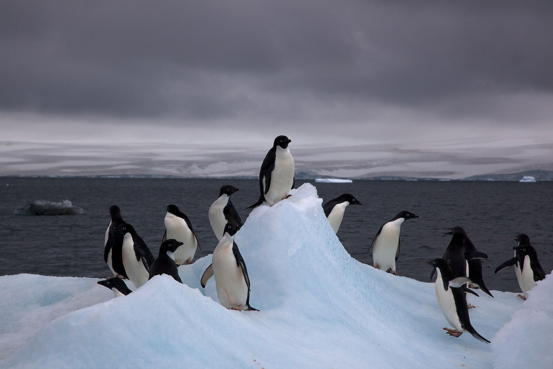 Are Tourists Exposing Antarctic Birds To Human Diseases?