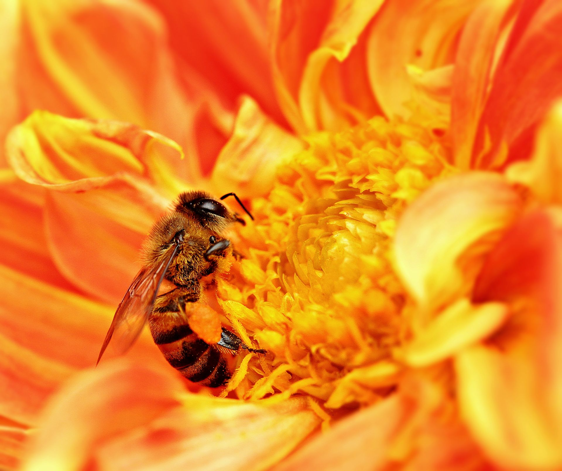 Honeybees Join The Elite Group Of Animals That Understand The Concept Of Zero