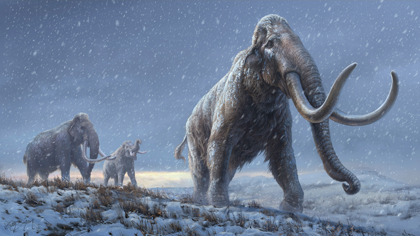 World's Oldest DNA Recovered From Million-Year-Old Siberian Mammoth Teeth  Kids News Article