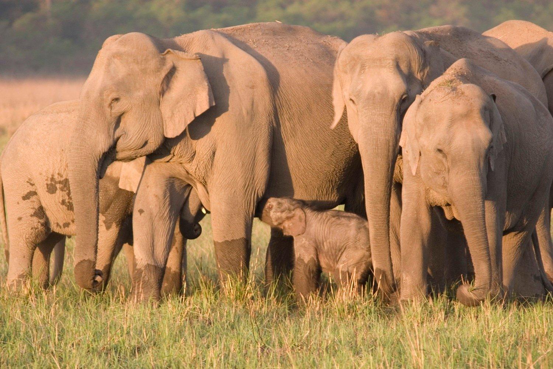 China's Wandering Wild Elephant Herd Captivates The World