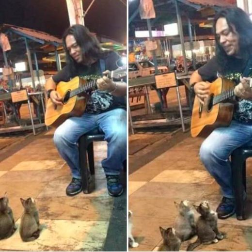 Video Of The Week — Music Loving Kittens Make Malaysian Street Artist's Day