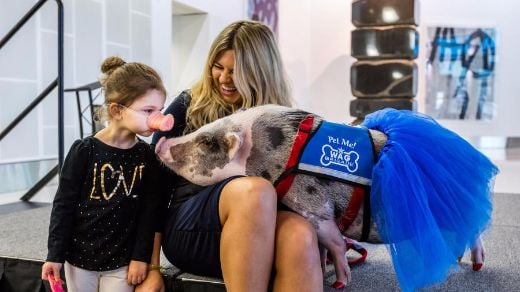 Adorable Pig Calms Stressed Travelers At San Francisco Airport