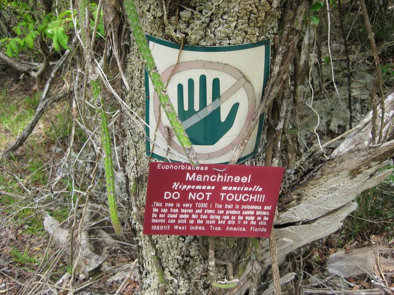 Manchineel trees often have warning signs (Photo Credit: Scott Hughes CC by SA 2.0)