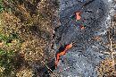 Lava From Hawaii's Kilauea Volcano Inching Scarily Close To Homes