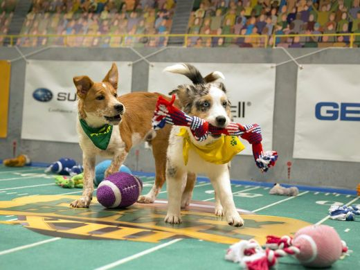 It's Super Bowl Sunday! Are You Ready For Some Puppy Bowl?