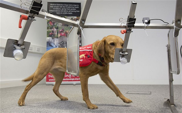 Can Dogs Detect Breast Cancer