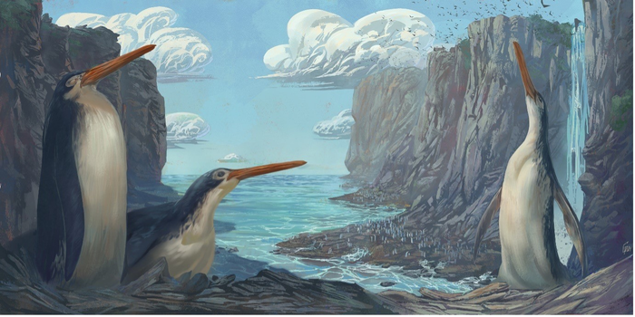 Fossil Found By Student Naturalists Turns Out To Be New Species Of Ancient Giant Penguins