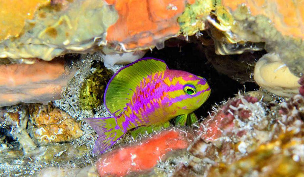 Scientists Stumble Upon Dazzling New Fish Species In Atlantic Ocean's Twilight Zone