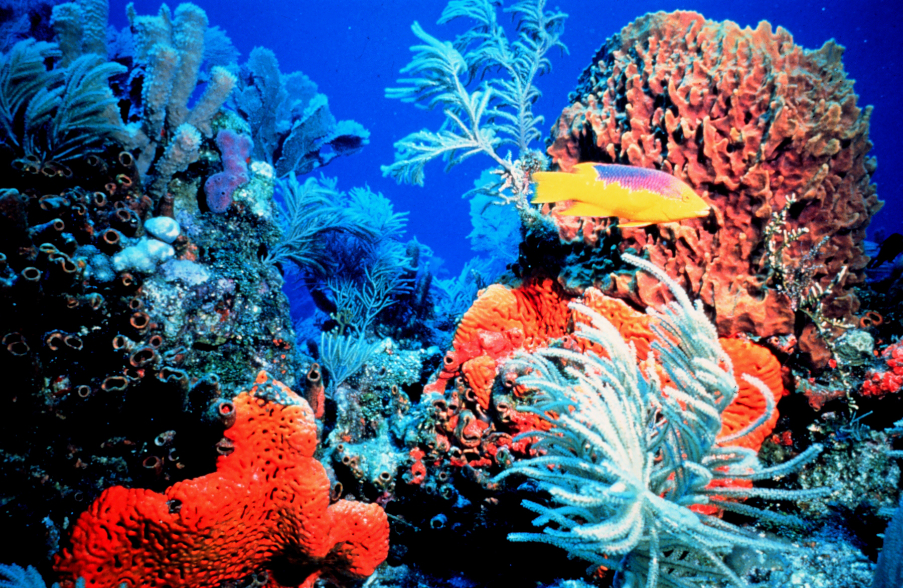 Can Lab Grown u0026#39;Superu0026#39; Coral Rescue Our Rapidly Dwindling ...
