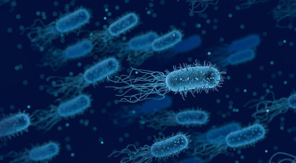 Crafty Bacteria Change Shape To Evade Antibiotics