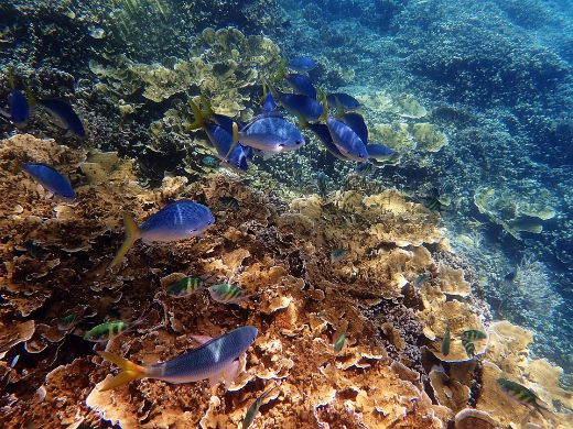 Back-To-Back Mass Bleaching Decimates Australia's Great Barrier Reef