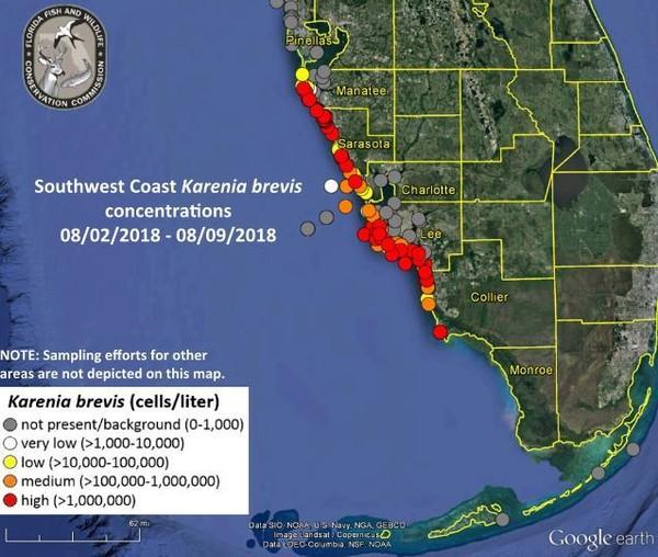 Toxic red tides plague florida 39 s gulf coast kids news for Tides 4 fishing sarasota