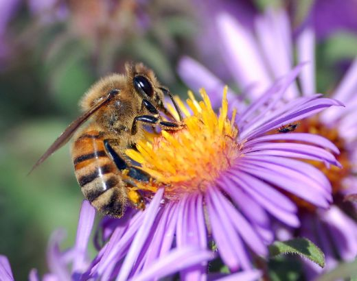 Finnish Scientists Develop Edible Insect Vaccine To Save Bees