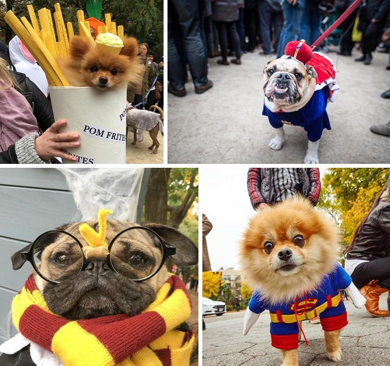Tompkins Square Park Halloween Dog Parade Celebrates 25th