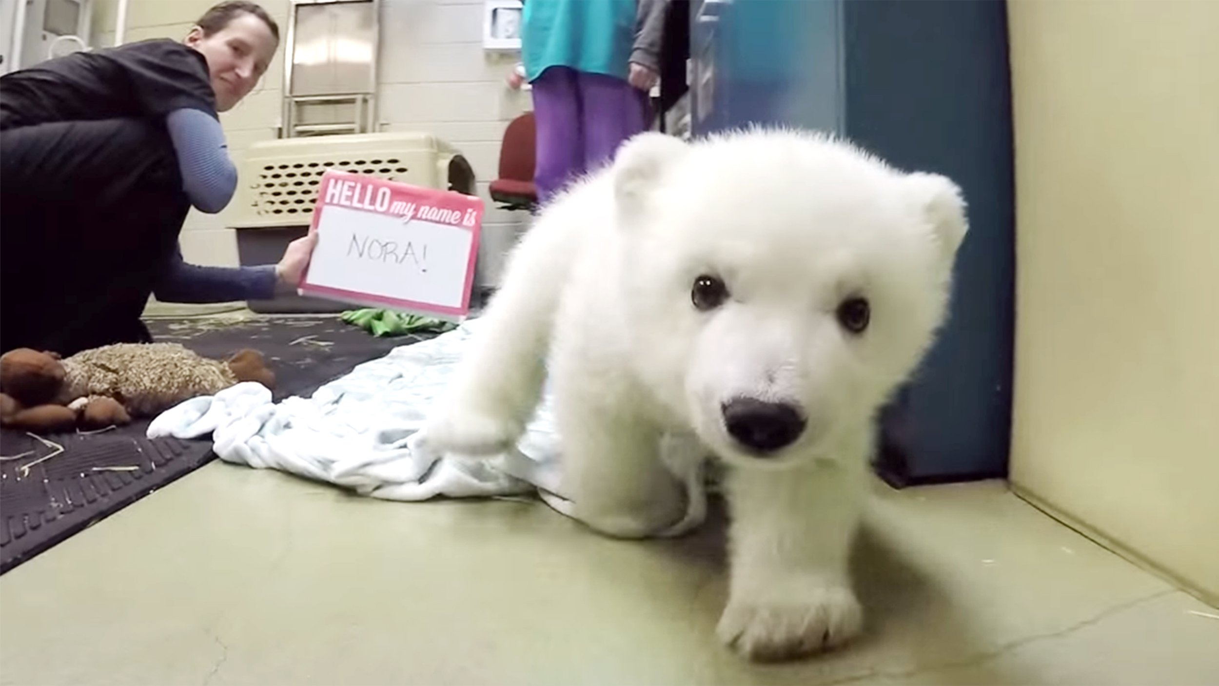 Video Of The Week — Adorable Polar Bear Cub Nora Chills Out At The ...