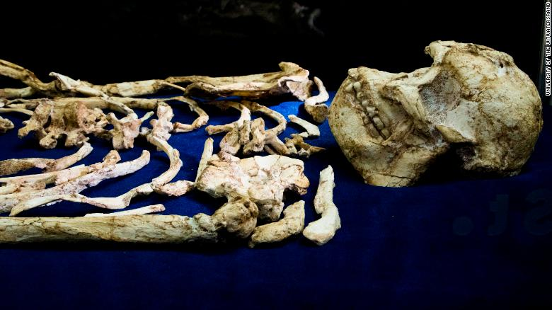 "Ancient Human Ancestor ""Little Foot"" Debuts In South Africa"