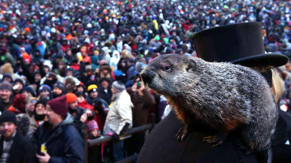 Punxsutawney Phil Predicts An Early Spring For The Second Consecutive Year!