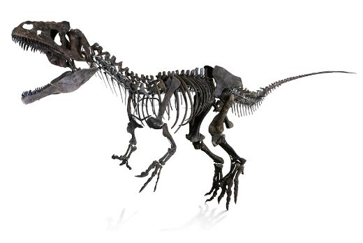 150-Million-Year-Old Mystery Dinosaur Skeleton Auctions For $2.3 Million!