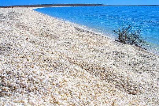 A226-_shark_bay_marine_park-_western_australia-_shell_beach-_2007-medium