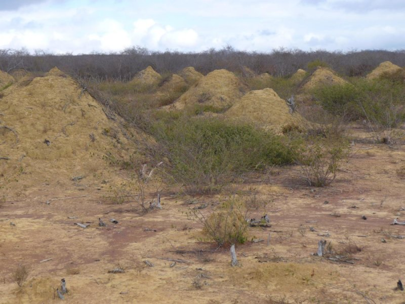 "Ancient Network Of Massive Termite Mounds In Brazil Are ""Biological Wonders"""