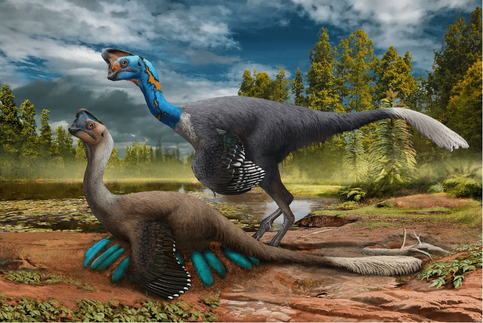 Rare Dinosaur Fossil Sitting On A Nest Of Eggs Unearthed