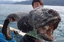 Japanese Fisherman Reels In Monster Wolffish