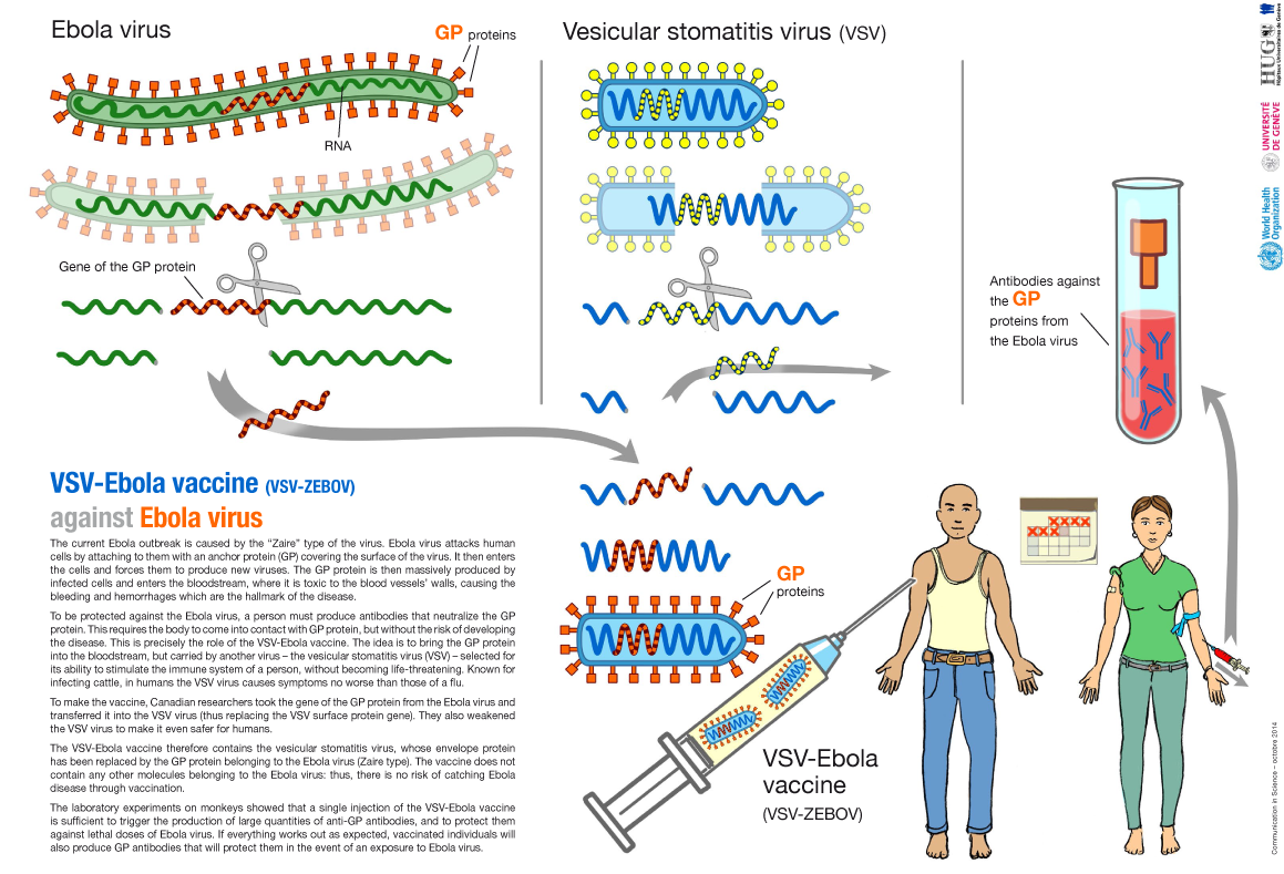 article essay about ebola Free ebola virus papers, essays,  - flesh-eating viruses in real life and in the movies essay one  this article summarizes hpv-16 post-transcriptional rna.