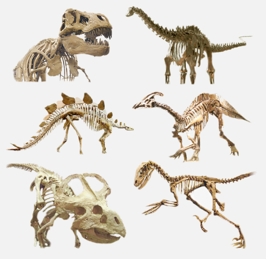 The Dinosaur Family Tree Gets A Makeover