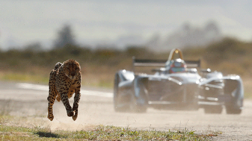 Formula E Car And Cheetah Face Off In An Epic Drag Race