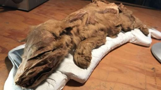 Perfectly Preserved Ice Age Animals Still Have Skin, Muscle, and Hair