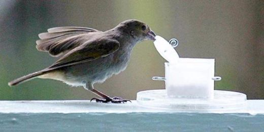 Surprise! City Birds Are Smarter And Healthier Than Their Country Counterparts!