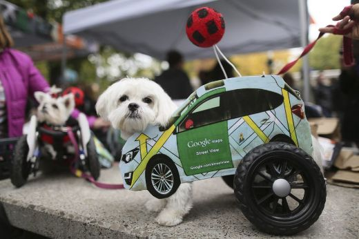 Tompkins Square Park Halloween Dog Parade Celebrates 25th Anniversary