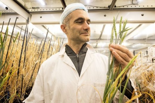 NASA Inspired Speed Breeding Technique May Help Feed Earth's Burgeoning Population