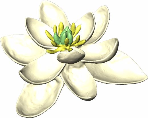 The World's First Flower Probably Looked Like The Modern-Day Magnolia