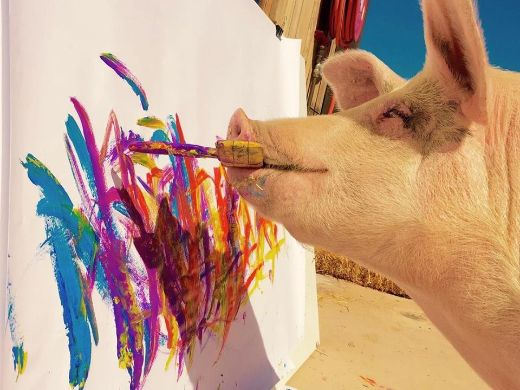 Meet Pigcasso, The World's First Pig Artist