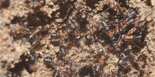 Ants Trapped Inside Abandoned Nuclear Bunker Develop A Unique Society