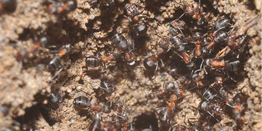 Landscape-1472842308-ants-medium