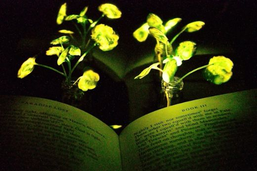 Mit-glowing-plants_0-medium