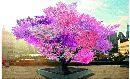 Tree_0-small