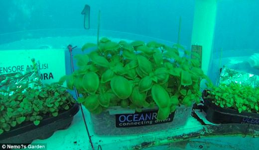 Nemo's Garden Takes Farming To The Next Frontier - Underwater!
