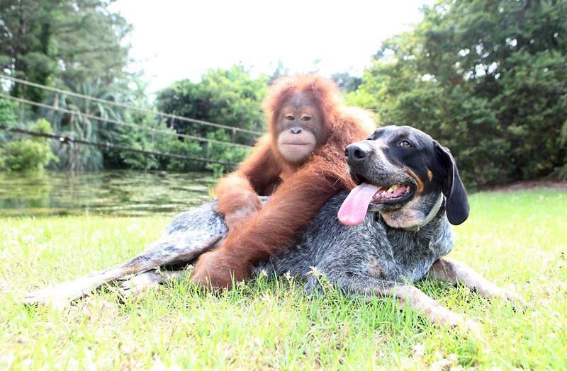 Video Of The Week - An Unusual Friendship