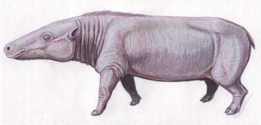 Fossil Discovery in Kenya Reveals Modern-Day Hippos Evolved In Africa