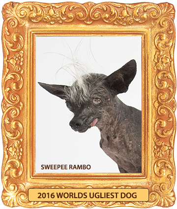 Sweepee_rambo_2016_worlds_ugliest_dog_framed-360-1-medium